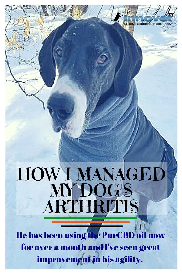 How I Managed My Dog S Arthritis Dogs Happy Animals Arthritis