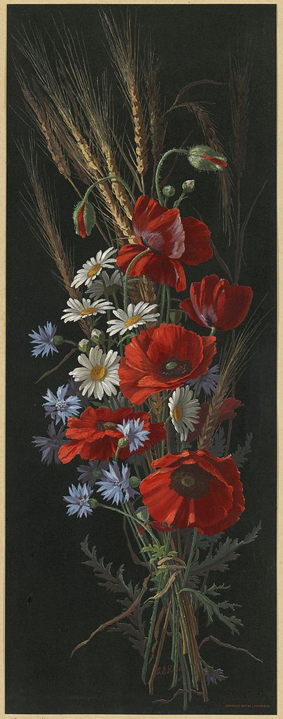 All sizes | Poppy, Bachelors-buttons and Daisies | Flickr - Photo Sharing!