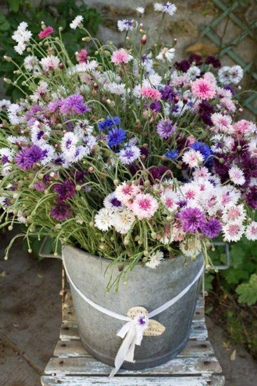 Bucket of multi coloured cornflowers. Visit www.rosetintmywedding.co.uk for bespoke wedding planning and design UK.