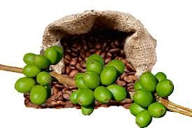 The coffee beans often have higher quantity of chemical chlorogenic   acid that will always lower the blood pressure within your body system  https://www.youtube.com/watch?v=XJ_WfCa5CPU&feature=youtu.be