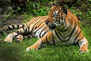 Stand bye by Toni Panjaitan - at ragunan Click on the image to enlarge.