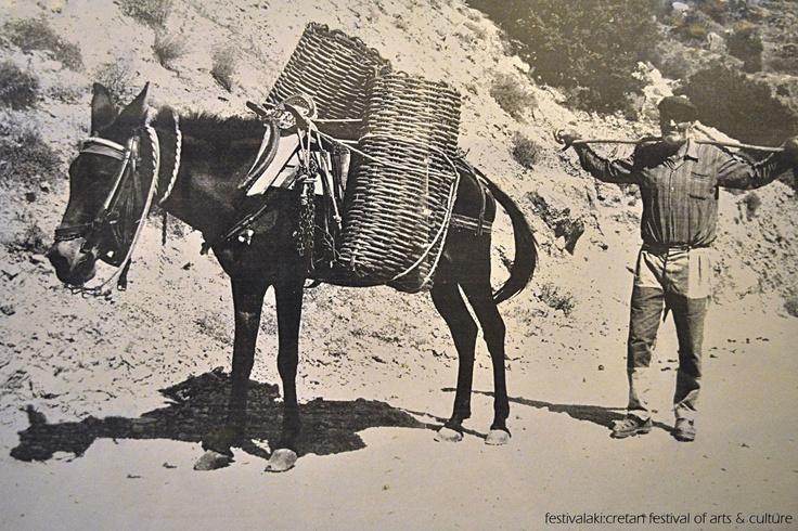 Μια εικόνα απο τα παλιά. Δυσεύρετα πια τα κοφίνια από Σφάκα... δυσεύρετοι και οι γαιδάροι...    Memories from Crete of the past.