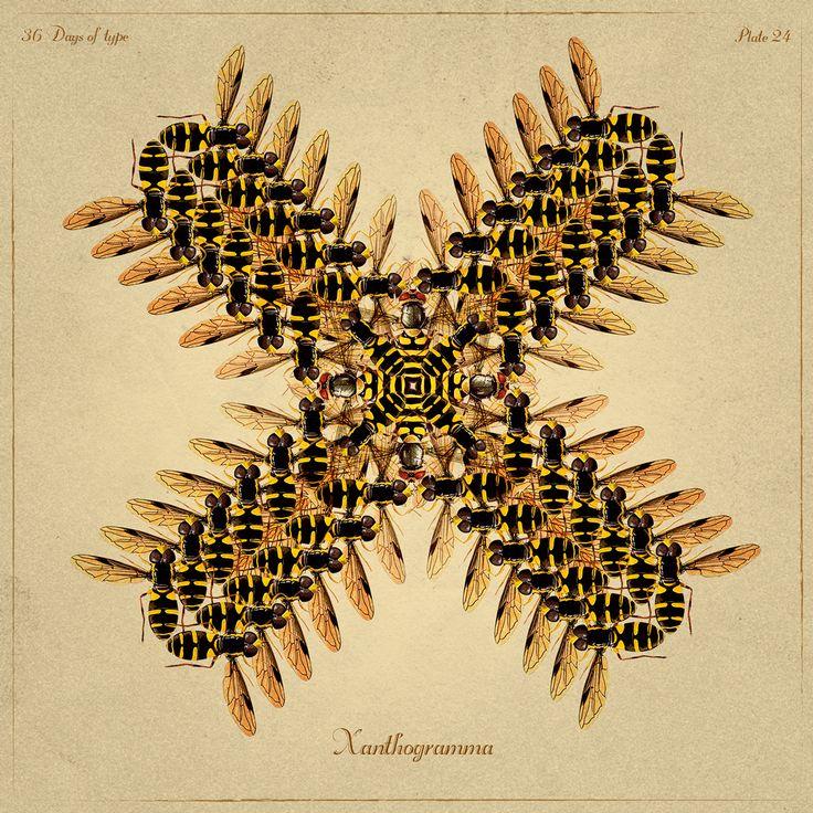x - xanthogramma - antropoamórfico alphabet - yes i do - 2015