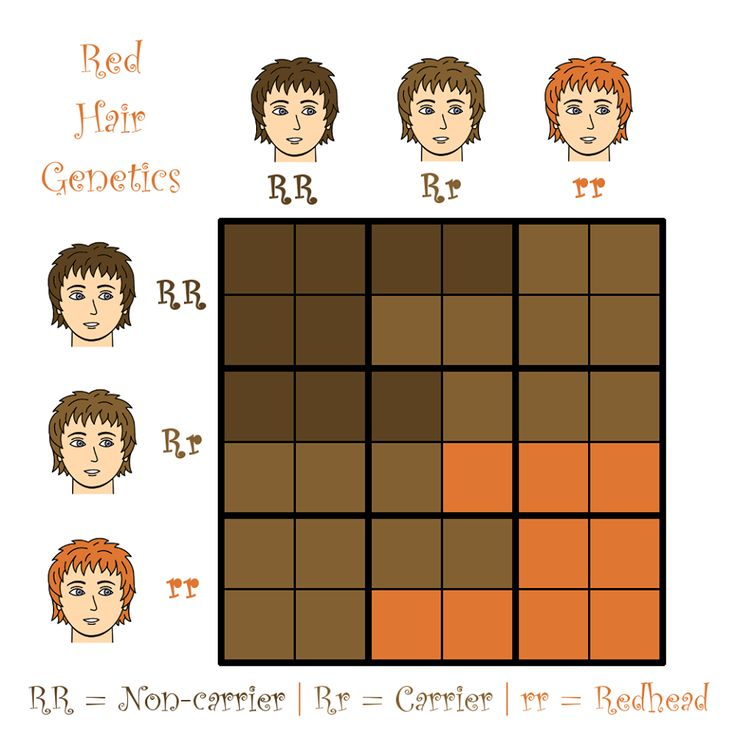What Hair Color Is Dominant And Recessive Todayss