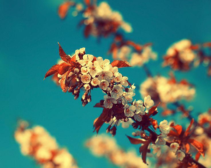 Vintage Summer by Sortvind on DeviantArt