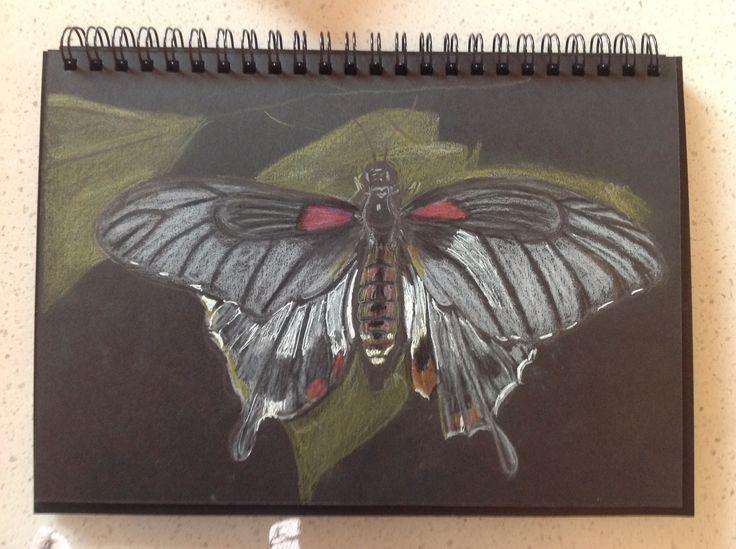 Butletsfly