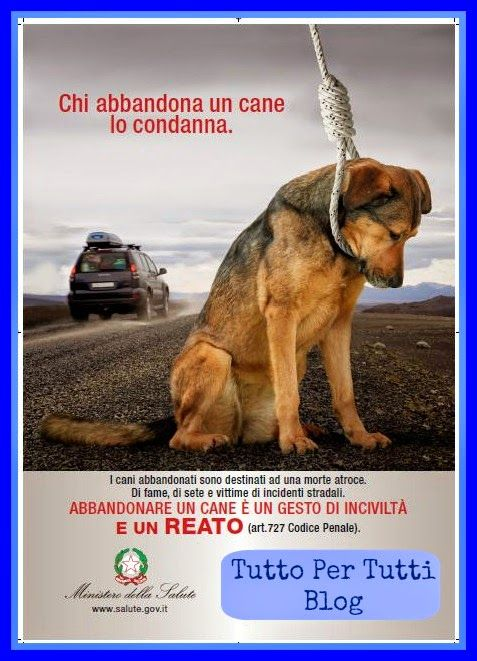 Tutto Per Tutti: NEWS & SUPPORT - L'ESTATE DEGLI ANIMALI