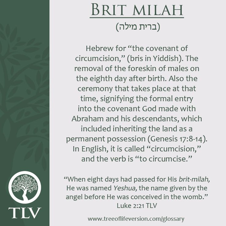 17 Best Ideas About Brit Milah On Pinterest Jewish Baby