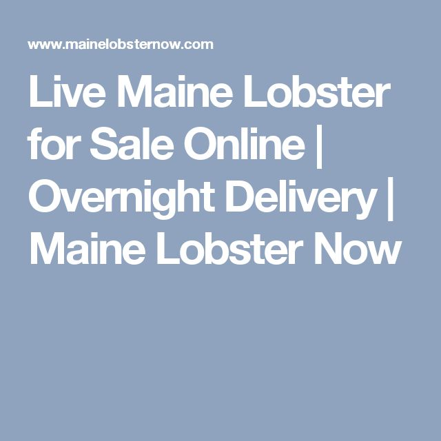 Live Maine Lobster for Sale Online | Overnight Delivery | Maine Lobster Now
