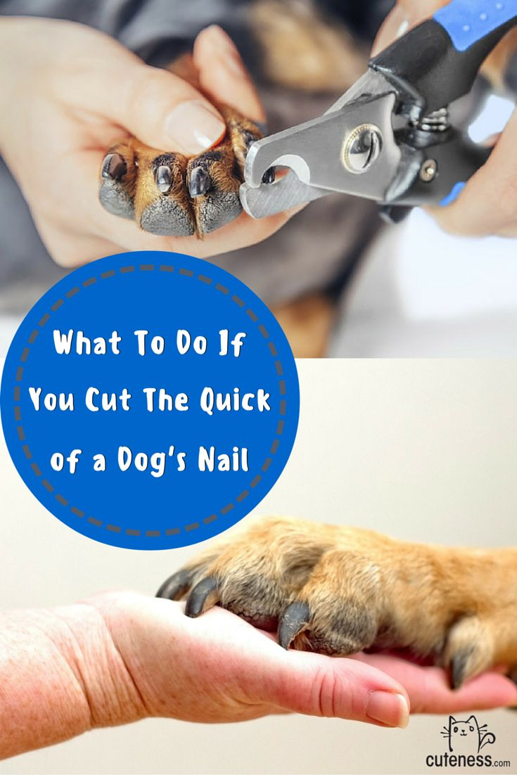 1000 Images About Dog Care Grooming On Pinterest The