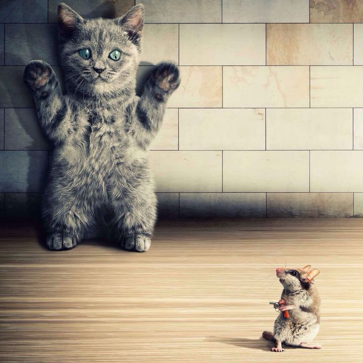 Instead of the cat killing the the mouse the mouse will kill the cat!