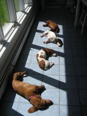how cute!  My dogs love to lay in the sun too!
