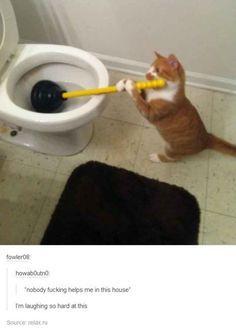 30 publicaciones de Tumblr sobre animales que te dejarán riendo