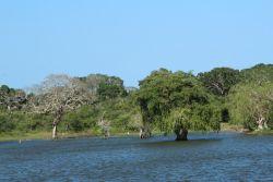 """Inundación Parque Nacional Yala. descubre todo sobre hacer un #Safari en Sri Lanka con nuestro artículo """"En búsqueda del Leopardo esrilanques y el #Elefante asiático"""" en #DesarrolloPeregrino tu #blog de #Viajes"""