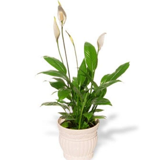 17 Best Images About House Plants On Pinterest Indoor
