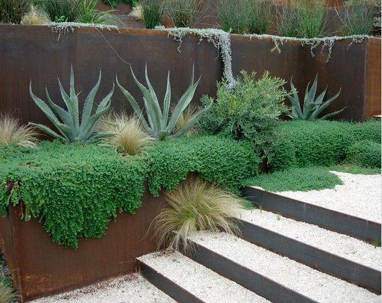 An austere desert entrance, succulents contrasted by concrete steps.