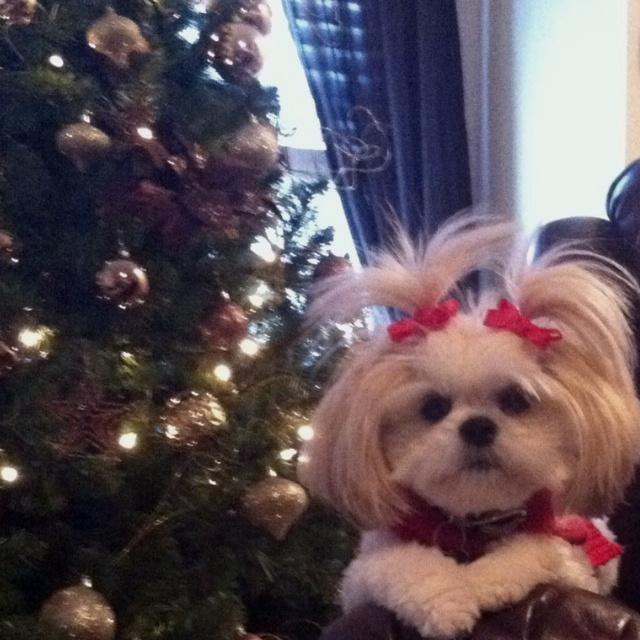 My dog Baylie :] | Baylie Grace | Pinterest | Dogs