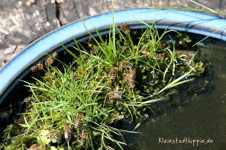 Bienen-Tränke von Kleinstadthippie vegan Food Blog