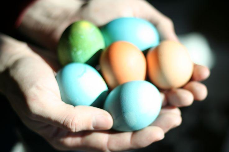 DIY voor Pasen: Eieren verven met zelfgemaakte verf op natuurlijke basis.