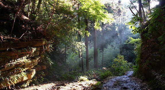 Kamakura Travel: Hiking Trails