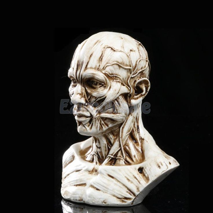 "Resin 4"" Human Model Skull Head Muscle Bone Medical Teaching Antique White"
