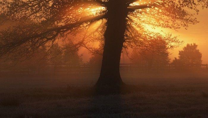 Portfolio - treescapes