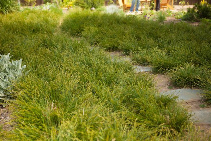 Small Meadow Garden Ideas