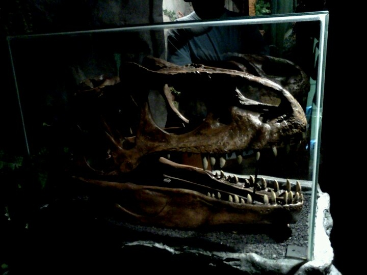 decoding fossils of dinosaurs Free online library: just for frills decoding dinosaurs' cryptic anatomical features by science news science and technology, general animal anatomy research dinosaurs physiological aspects tyrannosaurus rex.