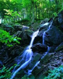Døndalen (thundering valley) - Bornholm, Denmark..i love waterfalls Dit is een geweldige plek om te wandelen!!!!!