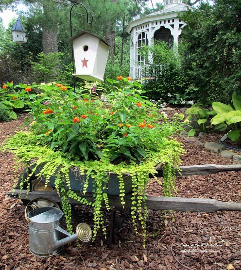 wheelbarrow planter with two kinds of Lantana and Creeping Jenny