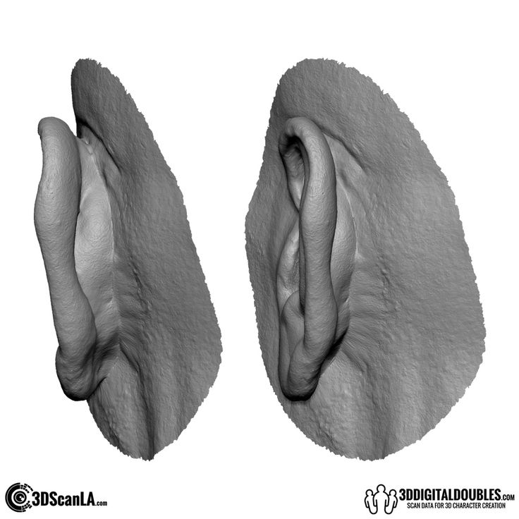 Free 3D Scan Data from 3DDigitalDoubles.com - 3D Head and Body Scanning for 3D Character Design | Free Anatomical Scan; Ear