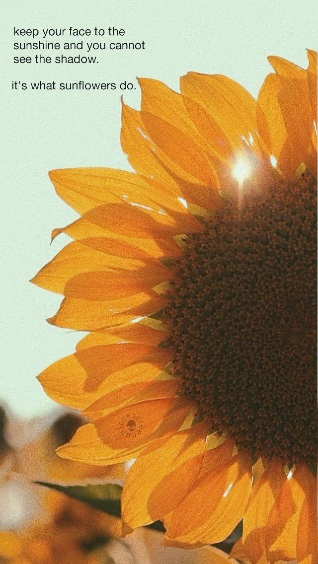 Pin By Anca Perta On Anca Sunflower Quotes Flower Pots Sunflower