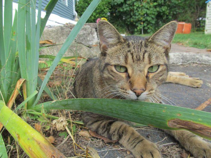 Dan Cosgrove Animal Shelter Lost cat! Jack, a 13 pound tan
