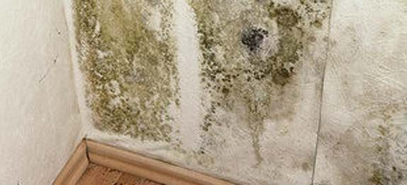 Nettoyer les moisissures sur un mur | Remèdes de Grand-Mère