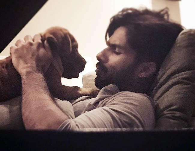 Shahid Kapoor with an adorable puppy on Instagram. #Bollywood #Fashion #Style #Handsome