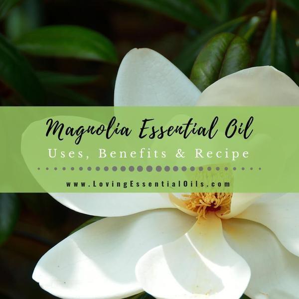 Magnolia Essential Oil Uses Benefits Recipes Eo Spotlight Essential Oil Uses Essential Oil Treatments Essential Oil Blends Recipes
