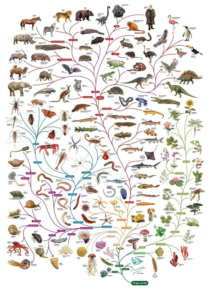 """A beautiful tree of life designed byThe Open University""""We should preserve every scrap of biodiversity as priceless while we learn to use i..."""