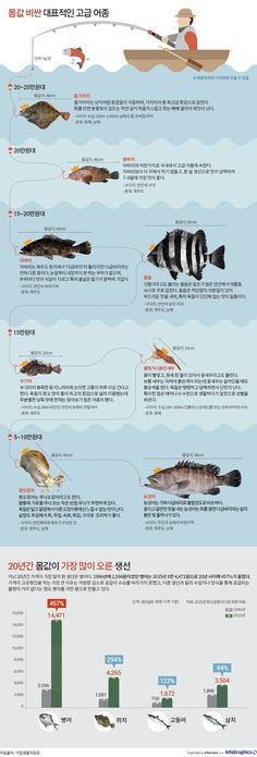 Photo of It is a high-end fish that costs hundreds of thousands of kilograms per kilogram of sushi.
