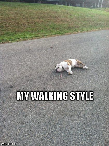 If you have every owned and tried to walk a bulldog, you understand the humor in this!