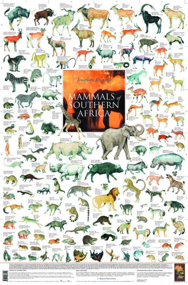 East African Mammals Poster Mammals Wildlife