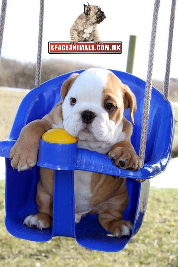 1000 images about venta de cachorros perros de raza