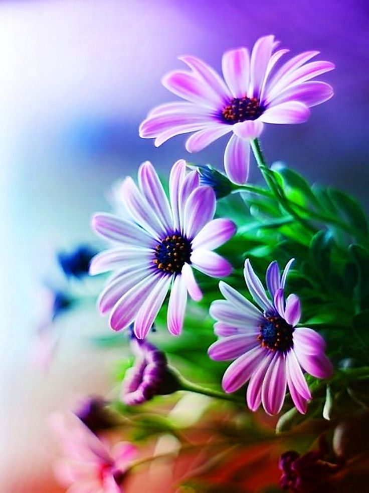 Pictures Of Flowers At Flowerinfo Org: Pin By خالد العبادي Khaled ALabbade On نباتات وزهور