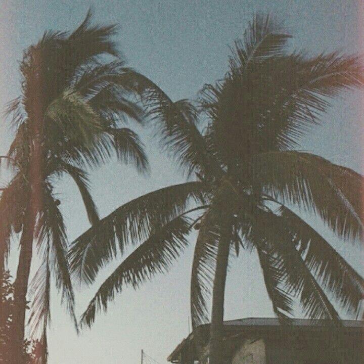 Coconut tree #silhouette