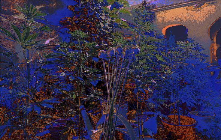 https://flic.kr/p/JyHeE5 | Moroccan Patio Plants | Plants on a Moroccan Patio