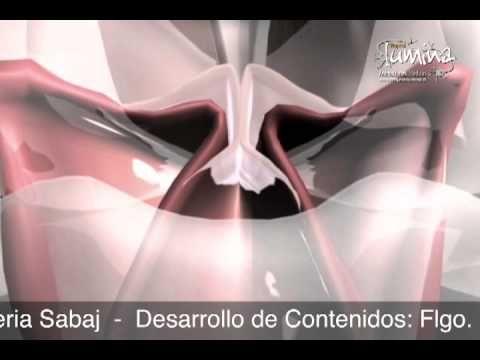 Laringe Humana, Ciclo Vibratorio de las Cuerdas Vocales