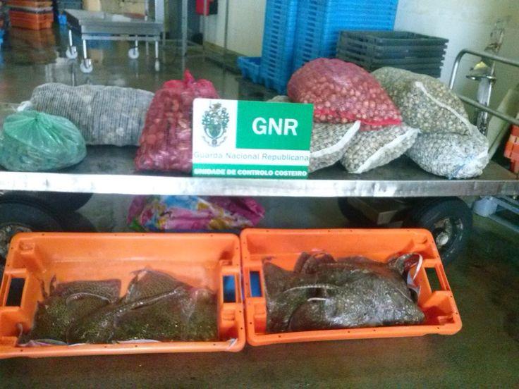 O Palhetas na Foz: Apreensão de raia e bivalves na Figueira da Foz