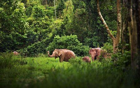 Wayanad ,Wildlife ,Nature
