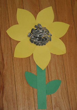 sunflower craft -- we're going to use little pieces of black construction paper in place of the sunflower seeds