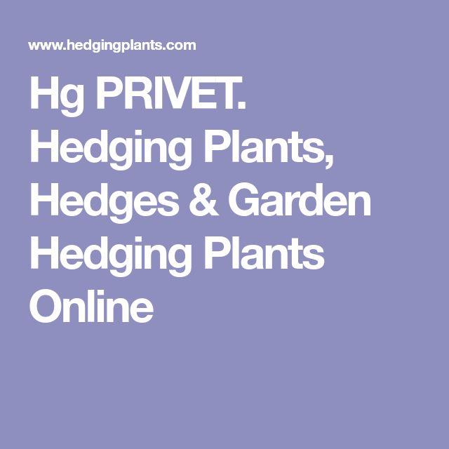 Hg PRIVET. Hedging Plants, Hedges & Garden Hedging Plants Online