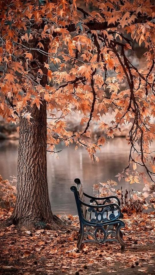 Would love to sit a while on this bench